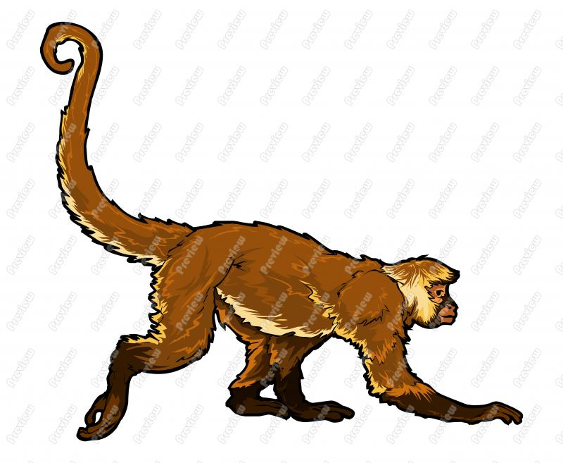 800x657 Spider Monkey Character Clip Art