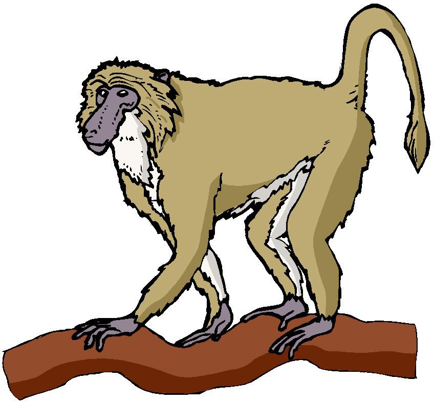 848x785 Spider Monkey Clip Art