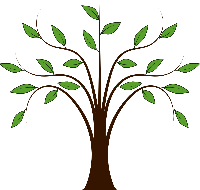 800x759 Spring Trees Clipart Trees Tree Clipart And Spring