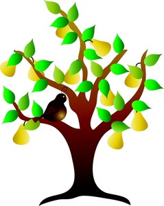 239x300 Clip Art Tree Green Spring Tree Png Clipart Picture Trees