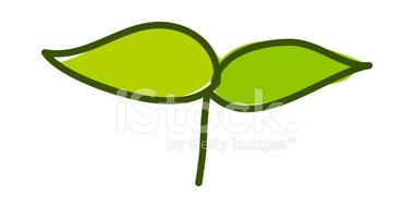 380x190 Sprout Stock Vectors