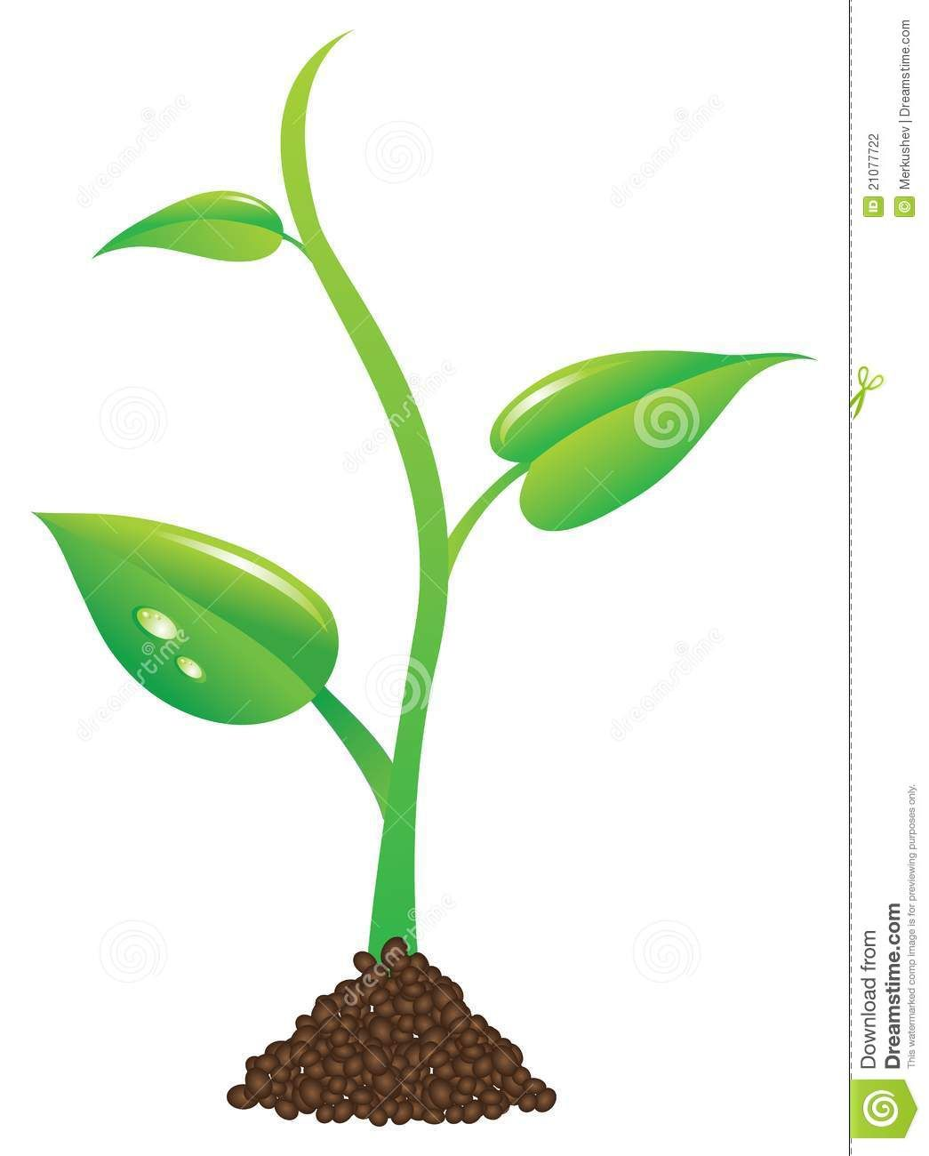 1045x1300 Plant Sprout Clipart