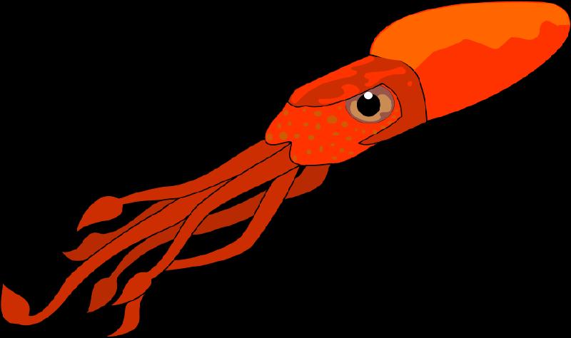 800x474 Squid Clip Art amp Squid Clipart Images