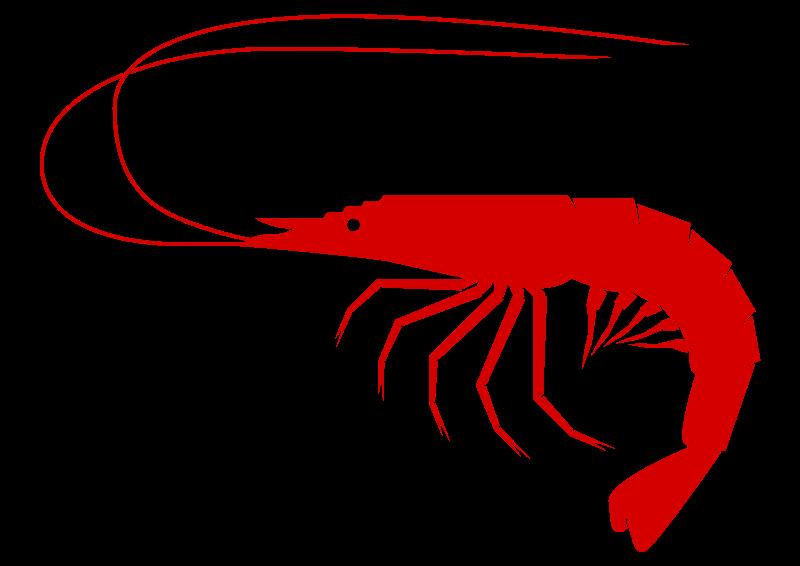 800x566 Squid clipart sea creature