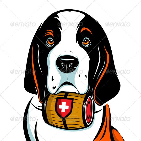 590x590 Saint Bernard Dog Face Saint Bernard Dog, Bernard Dog And Saints