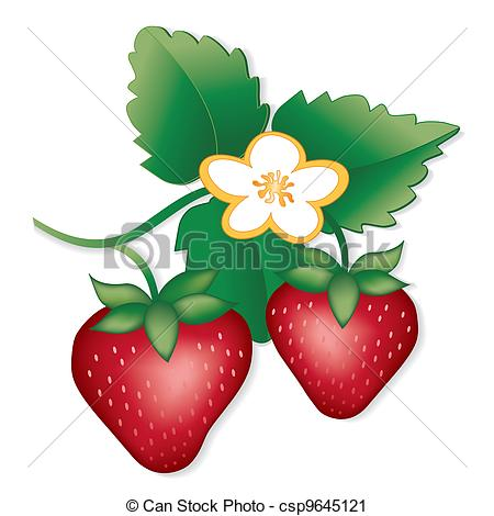 450x470 Strawberry Plant Clipart Amp Strawberry Plant Clip Art Images