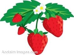 236x176 Pin By Ruby On Food, Vegetables Amp Fruit Illustrations