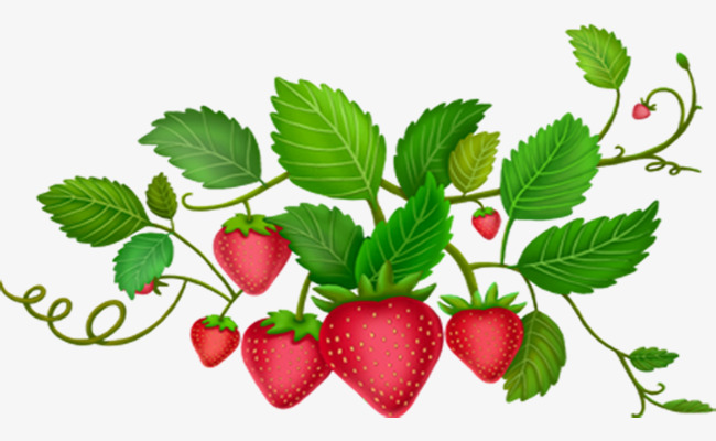 650x400 Red Cartoon Strawberry Plant Leaves, Red Cartoon, Strawberry Plant