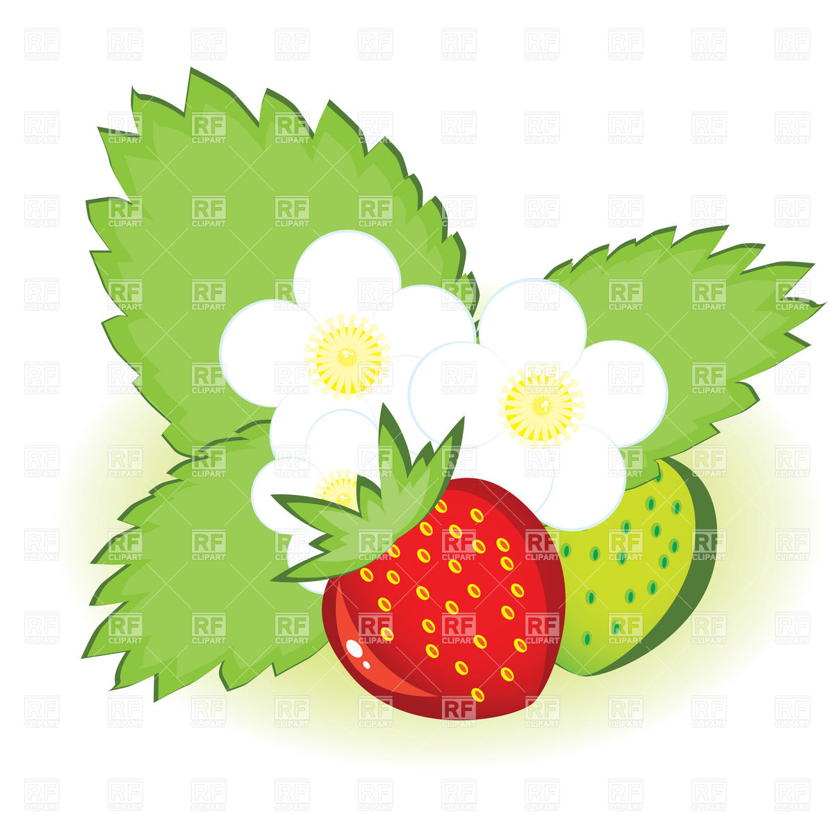 1200x1200 Ripe Strawberries With Leaves And Flowers Royalty Free Vector Clip