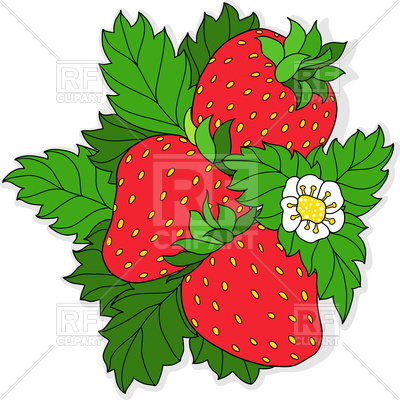 400x400 Ripe Strawberry And Flower On Background Of Green Leaves Royalty