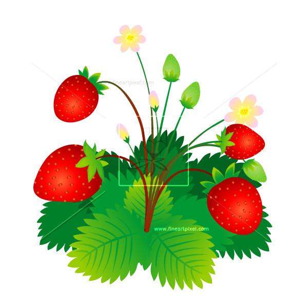 600x600 Strawberry Plant Free Vectors, Illustrations, Graphics, Clipart