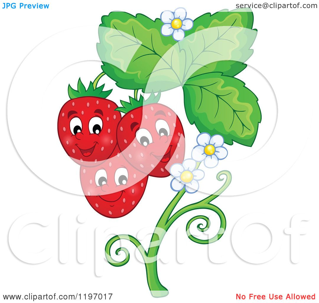 1080x1024 Cartoon Of A Happy Strawberries On A Plant