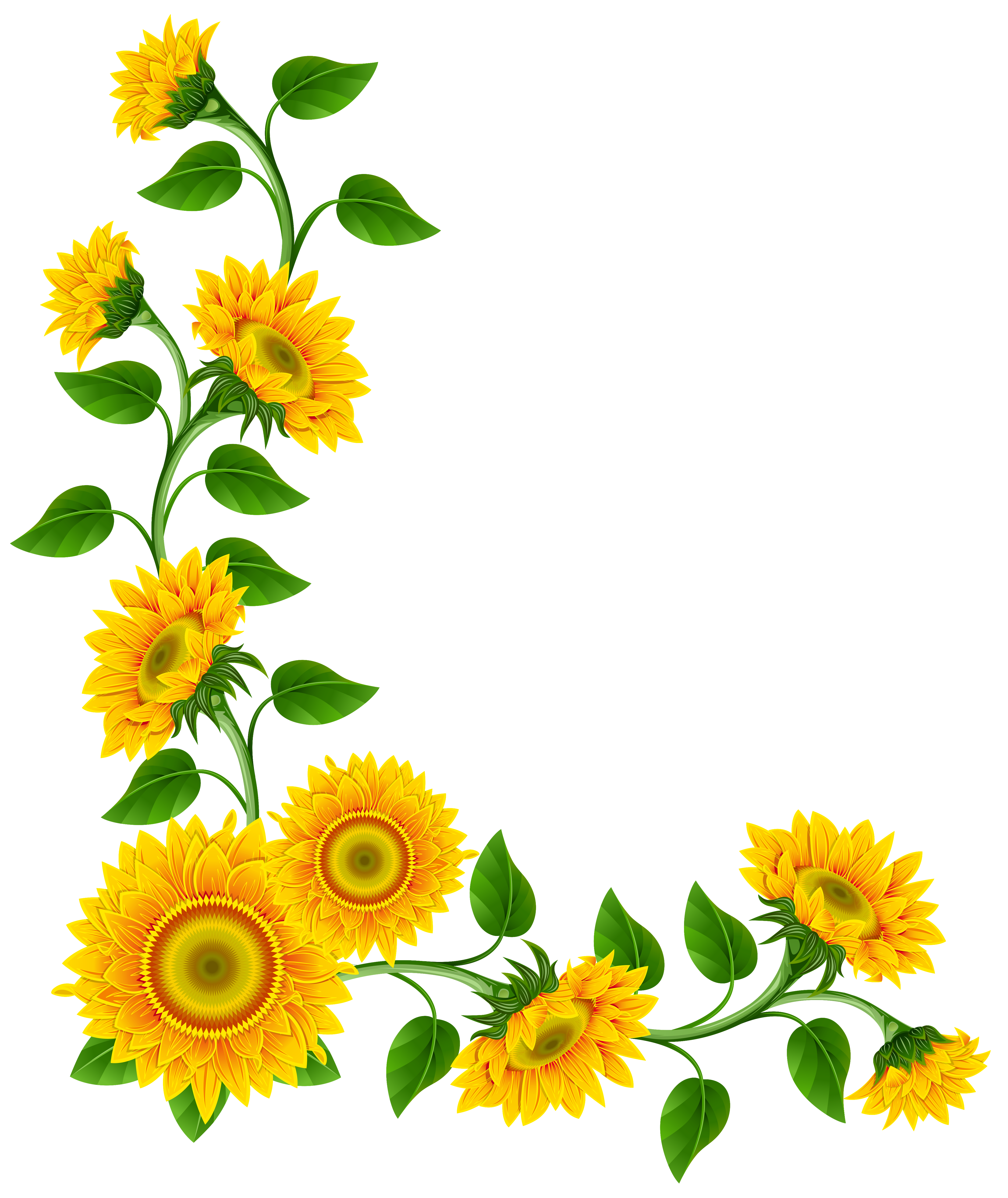4316x5130 Pictures Free Sunflower Clip Art Borders,