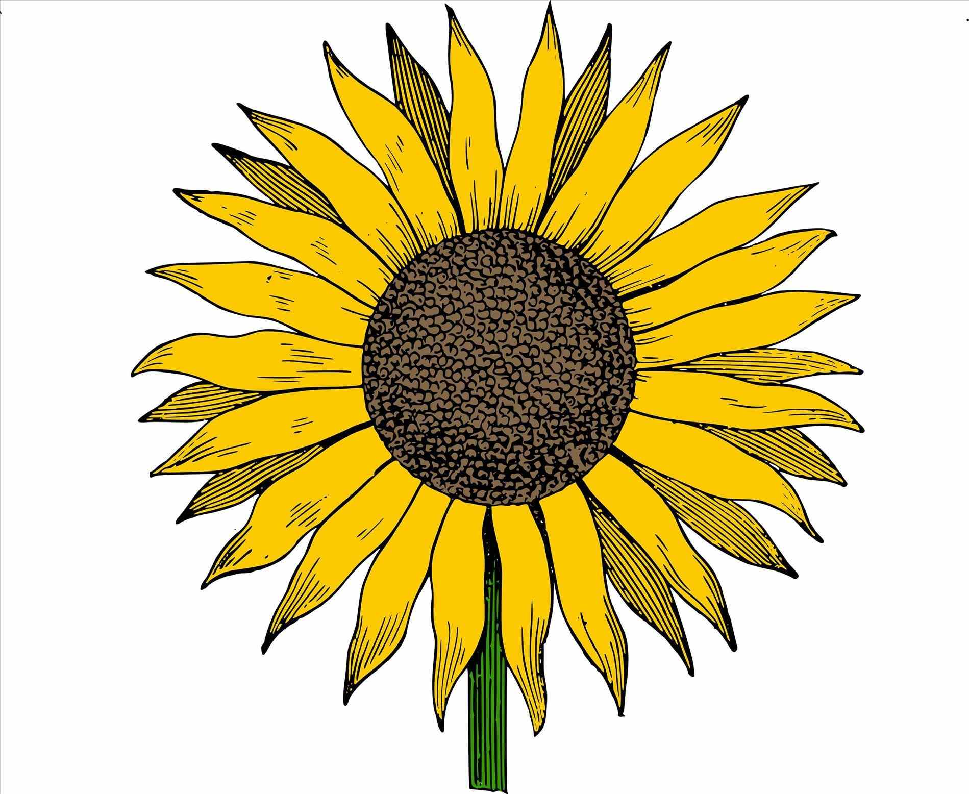 sunflower clipart at getdrawings com free for personal use rh getdrawings com sunflower clipart transparent sunflower clipart in microsoft word