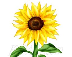 sunflower clipart at getdrawings com free for personal use rh getdrawings com sunflower clipart in microsoft word sunflower clip art free printable