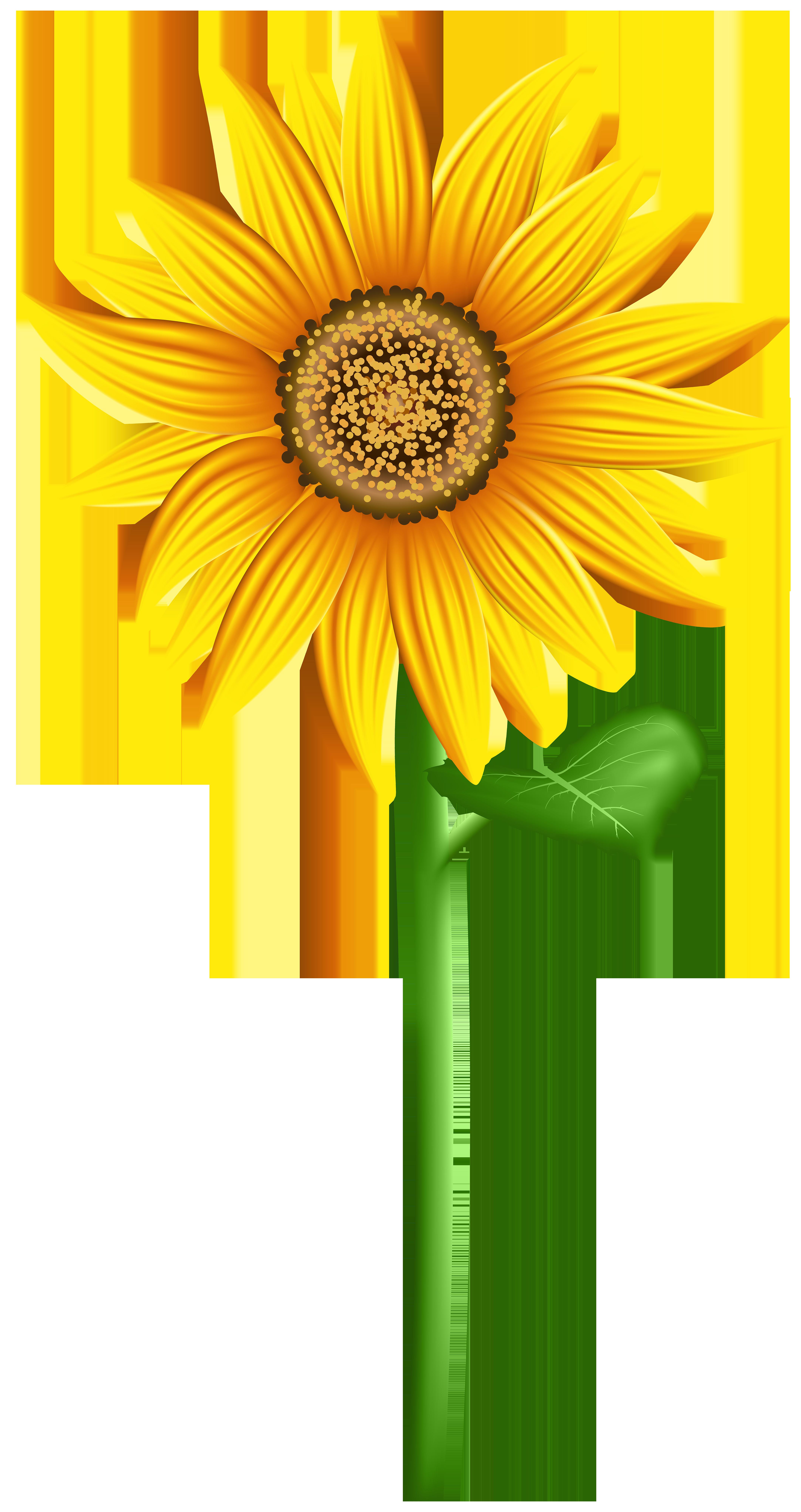 4241x8000 Sunflower Png Transparent Clip Art Imageu200b Gallery Yopriceville