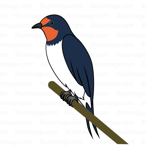 480x480 Free Swallow Cartoon Amp Clipart Amp Graphics [Ii]