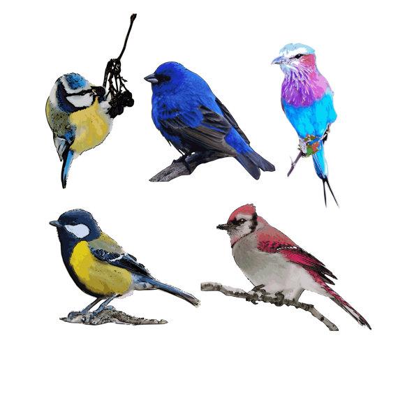 570x570 Song Bird Clipart
