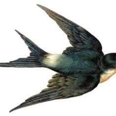 236x236 Vintage Bird Image
