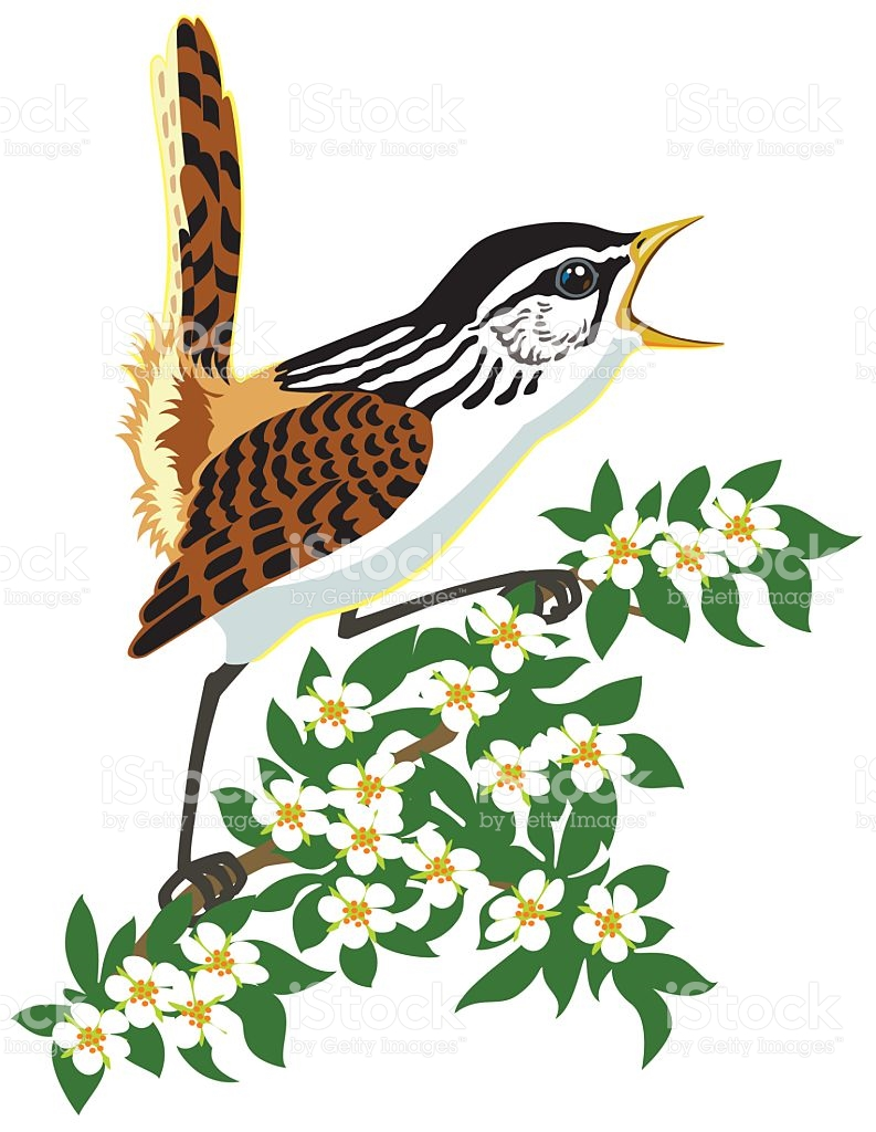 793x1024 Wildlife Clipart Songbird 4058685