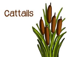 236x187 Watercolor Cattails Clipart, Digital Swamp Images, Southern