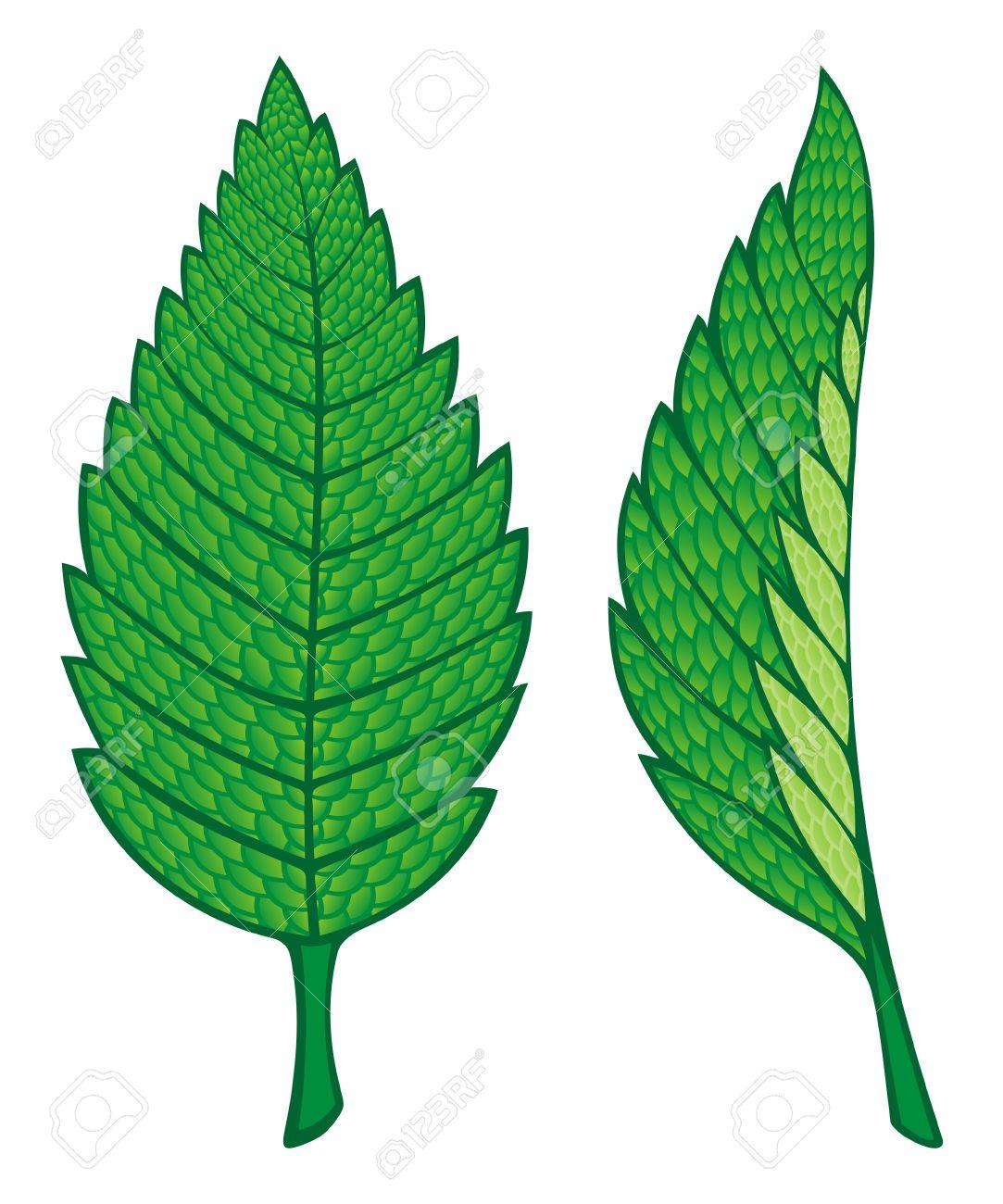 1083x1300 Clip Art Mint Leaf Clip Art