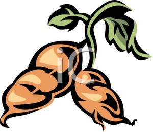 300x258 Two Fresh Sweet Potatoes