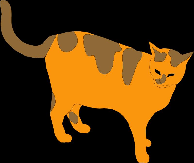 800x671 Tabby Cat