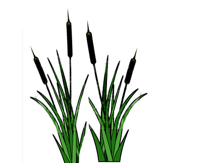 432x324 Clipart Of Cattails Cat Tails Clipground