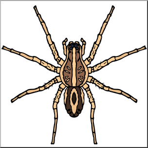 304x304 Clip Art Spiders Wolf Spider Color I Abcteach