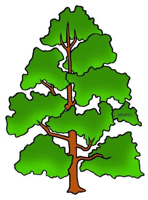 479x648 United States Clip Art By Phillip Martin, Tennessee State Tree