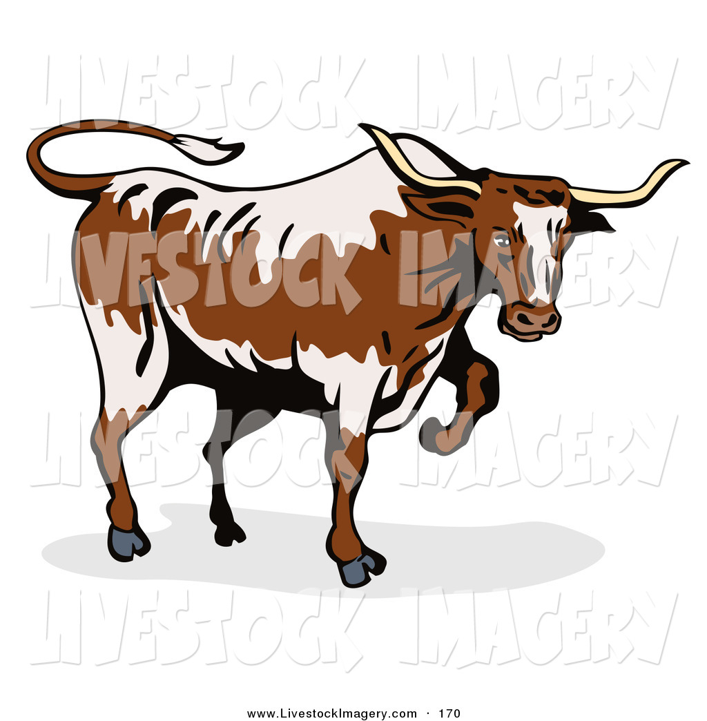 1024x1044 Clip Art Of A Walking Texas Bull Over White By Patrimonio