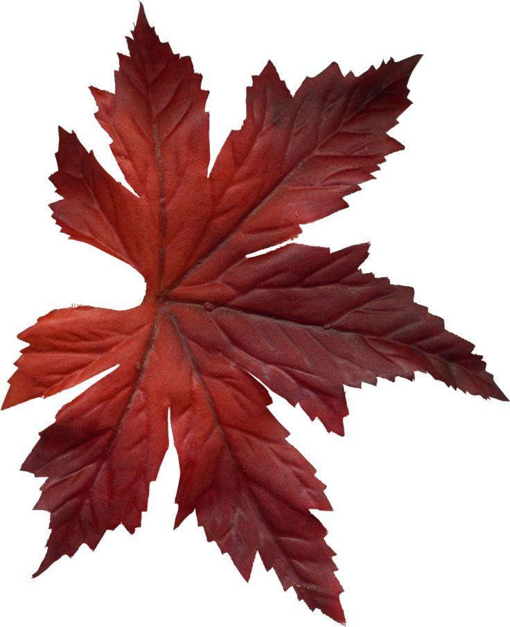 736x905 15 Best Clip Leaves Images On Autumn