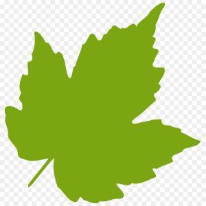 300x300 Stock Photo Horizontal Seamless Pattern Autumn Oak Leaves Image