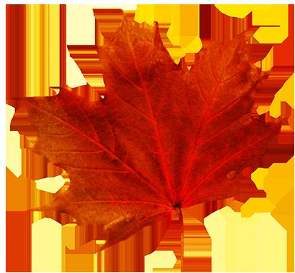 413x383 Autumn Leaf Clip Art