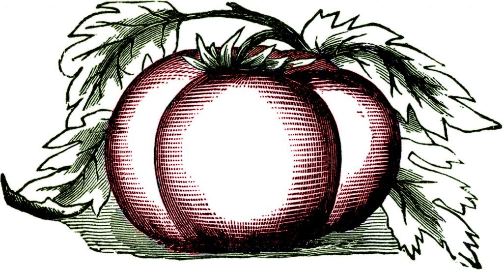 1024x549 Tomato Breeding Clipart