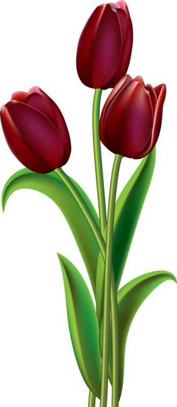 348x800 497 Best ~clip Art~ Images On Flower Drawings