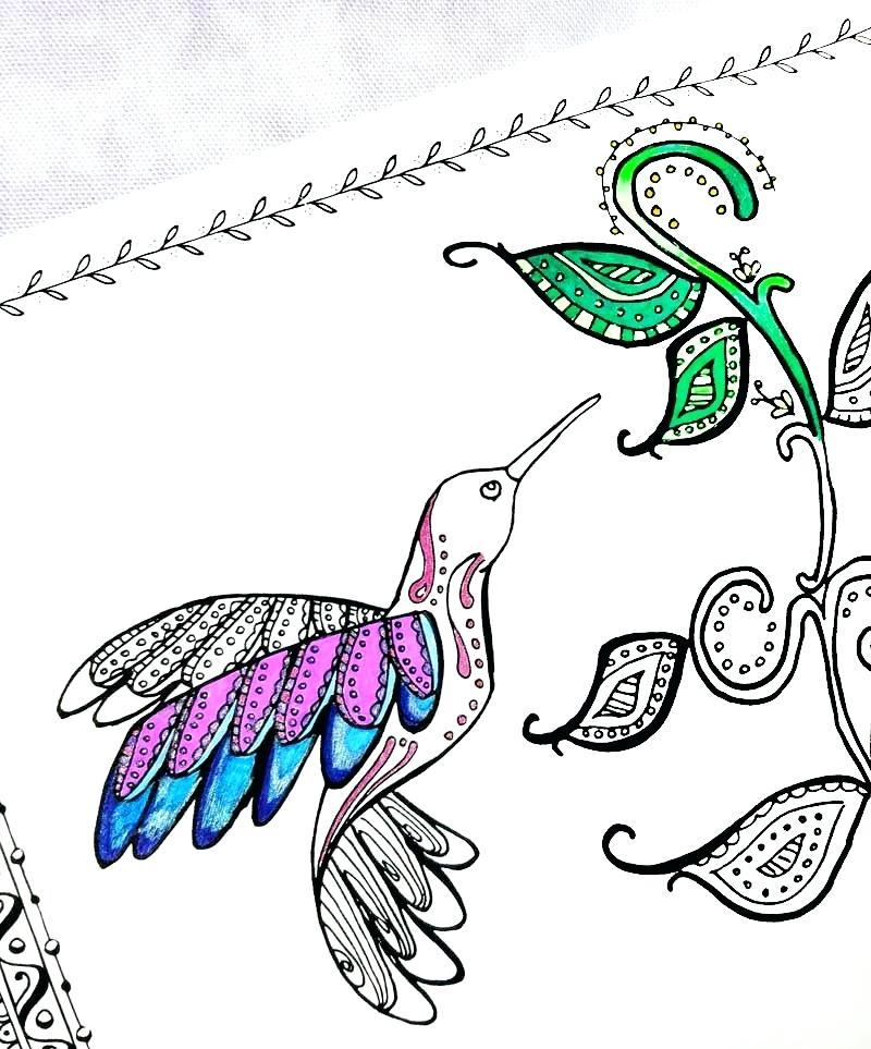 800x963 Hummingbird Coloring Pages Hummingbird Coloring Pages Hummingbird