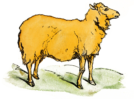 444x330 Free Sheep Clipart
