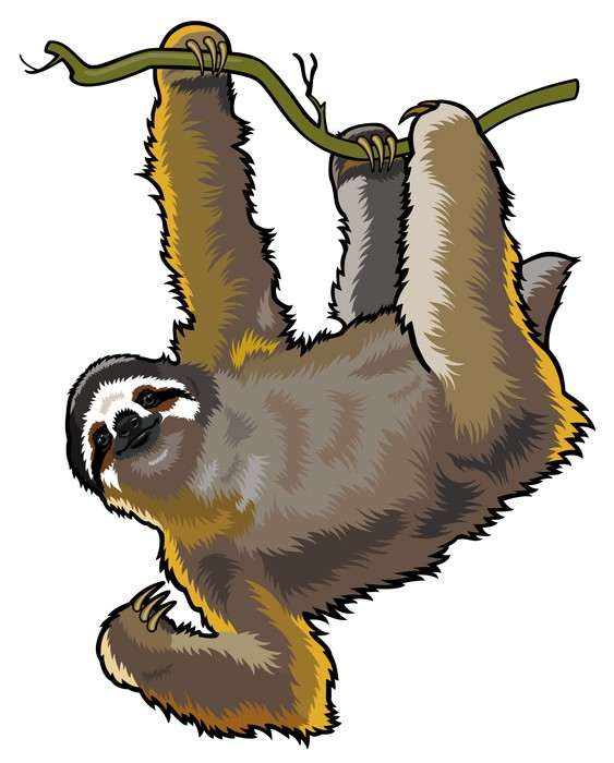 563x700 Three Toed Sloth Wall Mural We Live To Change