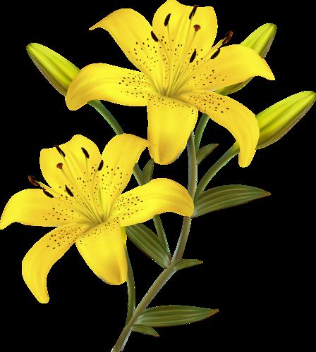 448x500 Flowers (5) K