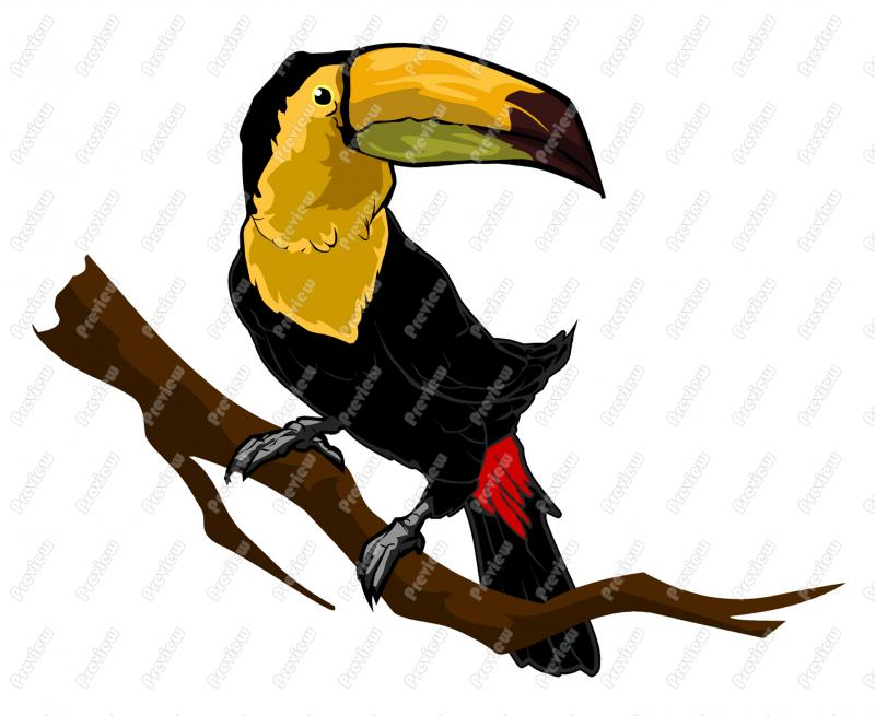 800x655 Toucan Character Clip Art