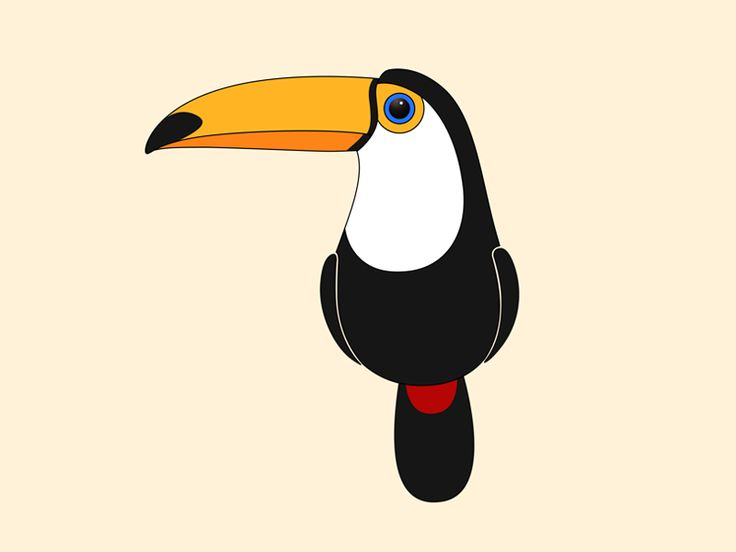 736x552 Toucan Clipart Real Animal Free Collection Download And Share