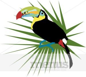 300x267 Toucan Clipart Tropical Bird