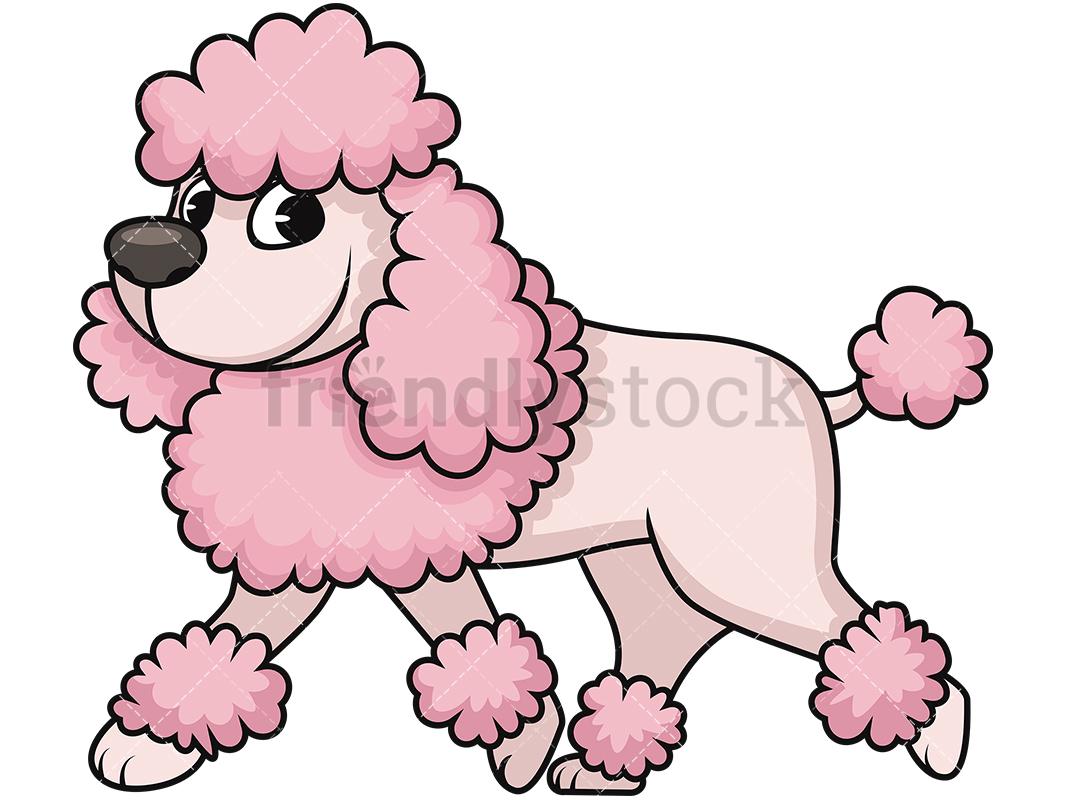 1067x800 Groomed Miniature Poodle Cartoon Vector Clipart