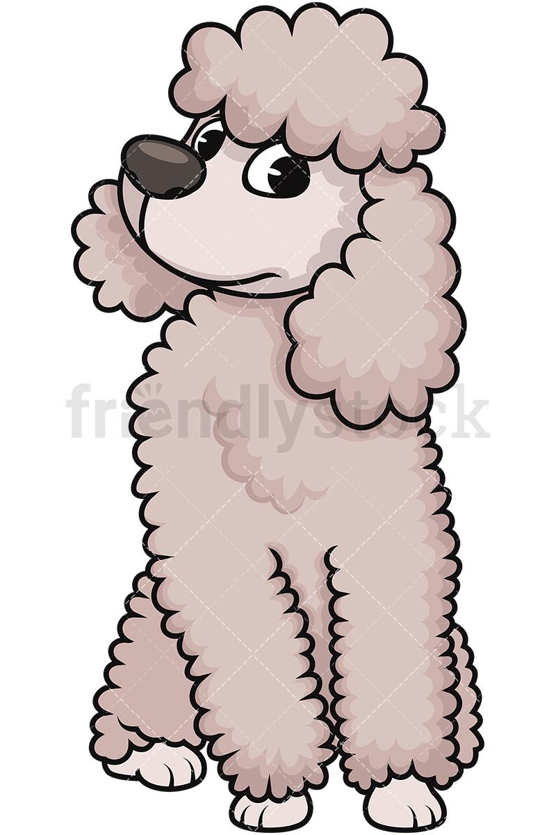800x1200 Curious Miniature Poodle Cartoon Vector Clipart