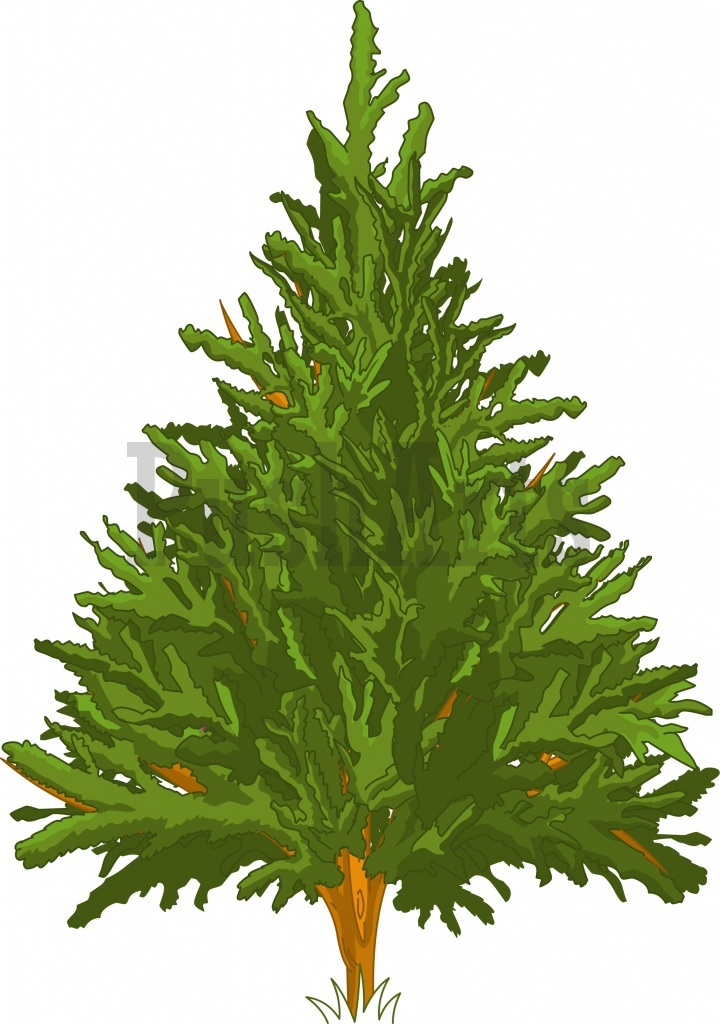 720x1024 Clip Art Pine Trees Clipart Collection