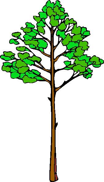 339x589 Remarkable Ideas Clip Art Tree Free Trees Clipart Pictures