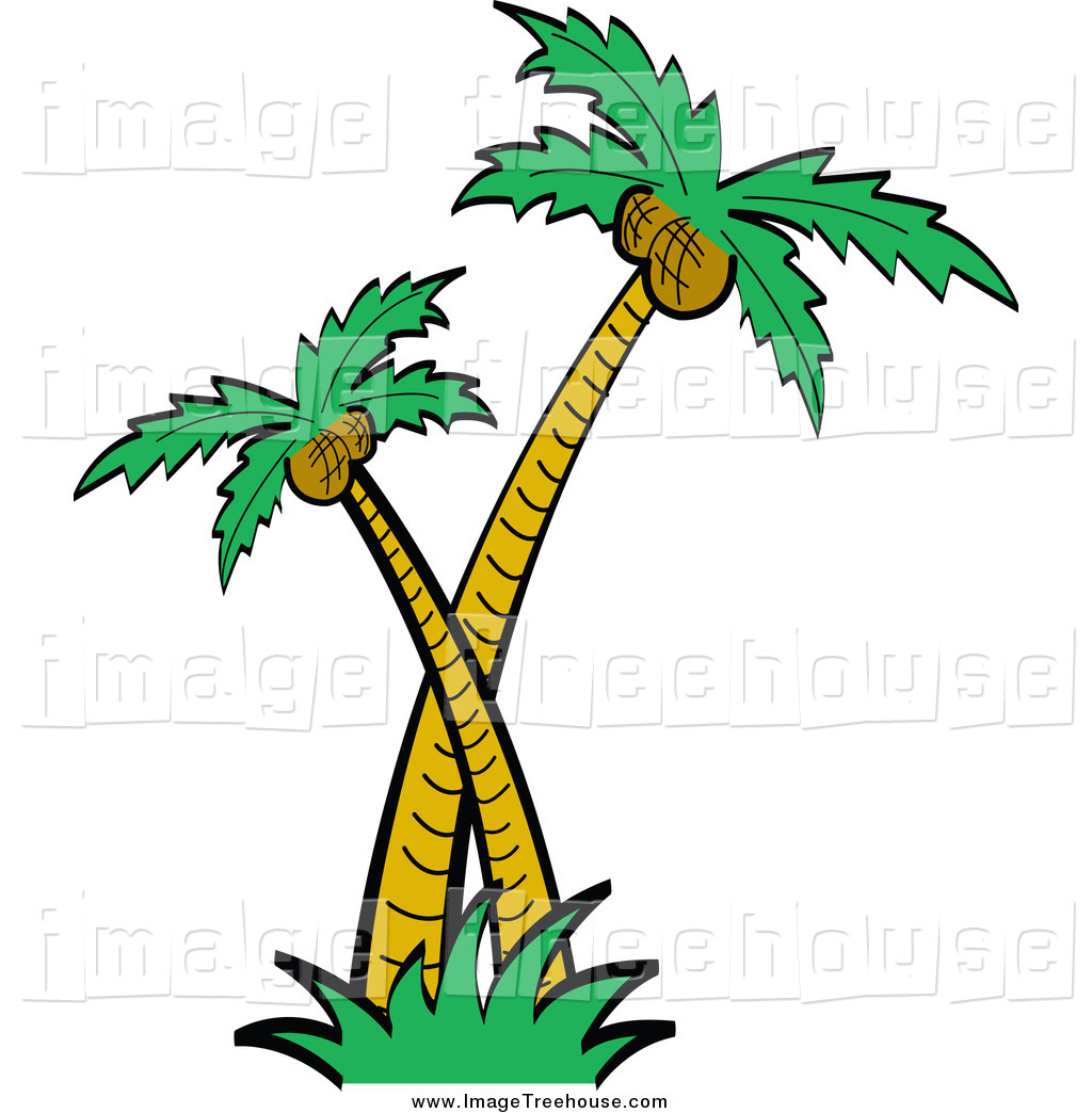 1024x1044 Palm Tree Root Clipart