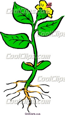 218x383 Plant With Roots Clipart Clipart Panda